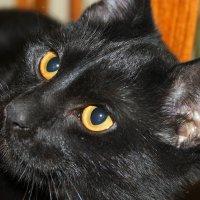 cat :: Оксана Хорева