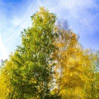 Осень :: Вера Кочергина