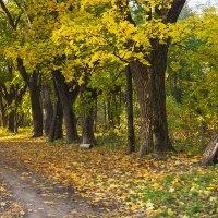 Осенний парк :: Татьяна Панчешная
