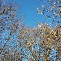 Осень. Небо. :: Елена Каталина