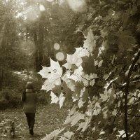 В осеннем парке... :: lady-viola2014 -