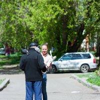 Голуби :: brewer Vladimir