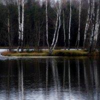 Роняет лес багряный свой убор.... :: Юрий Цыплятников
