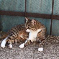 Кошка увидела мышку. :: Сергей Касимов