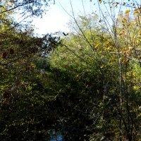 Осень у оврага... :: Тамара (st.tamara)
