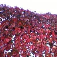 Осень :: Миша Любчик