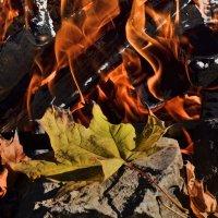 Огненная осень :: Татьяна Кретова