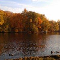 Воронцовский парк :: Margarita Pavlova