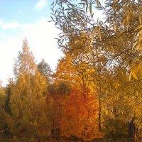 Осень в Воронцовском парке :: Margarita Pavlova