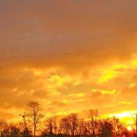 оранжевое небо :: Елена