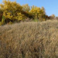 Осень - рыжая лиса, осень - палевая собака.. :: Ирина Сивовол