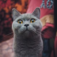 Как это нет еды?!? :: Дмитрий Беликов