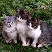 Тётя, тётя кошка, выгляни в окошко :: Татьяна Ломтева