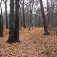 Конец октября как он есть - IMG_3793 :: Андрей Лукьянов