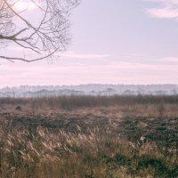 В утренней дымке. :: Яков Реймер