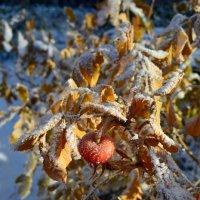 Сладкая осень :: Ольга