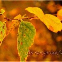 И осень уходит.... :: galina tihonova