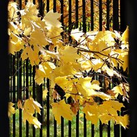 Листья желтые... :: Татьяна Симонова