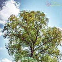 Дерево :: Серега Иванов