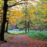 осень :: valeriy g_g