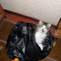 Кот воришка :: Серёга Захаров