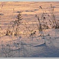Холодный вечер (или серебристый?) :: tankist Алексей
