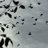 птицы-.листья :: Валентина