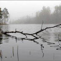 Утро туманное (в) :: Николай Кувшинов