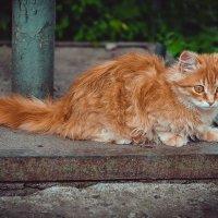 Всё тот же кот)) :: Ксения Базарова