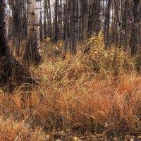 Горит костёр осенних трав. :: Лилия *