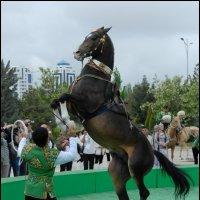 Ахалтекинец :: Ахмед Овезмухаммедов