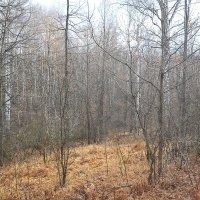 осень бродит по лесу... :: Yasnji