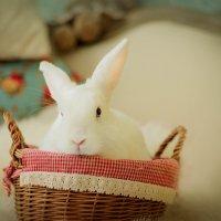 Кролик,который живет в фотостудии. :: Галина Мещерякова