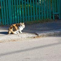 Осенняя прогулка :: Татьяна Петранова