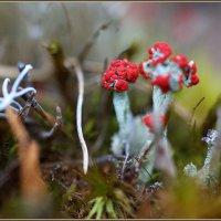 Лесные гномики... :: Айвар Вилюмсон