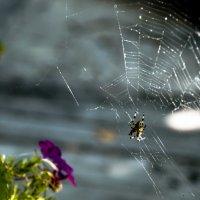 Может и я буду когда-то пауком?? :: Владимир Шитиков