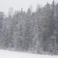 Снегопад, снегопад,... :: Наталья Пендюк Пендюк
