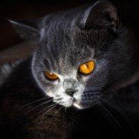 Моя любимая кошка! :) :: Андрей Гриничев