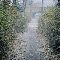 Первый снег :: Надюшка Михальчишина