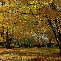 Золотые листья Флоры :: Alexander