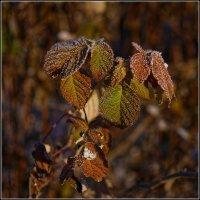 Осенние листья :: Владимир Холодный