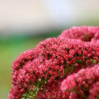 Цветы поздней осени. :: юрий