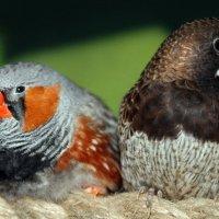 птички :: Наталья Шелыганова