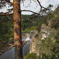 Этот таинственный лес... :: олег