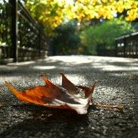 Осень :: Marina Timoveewa
