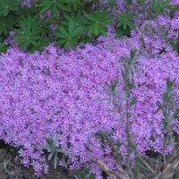 Коврик из цветов :: Яна Чепик