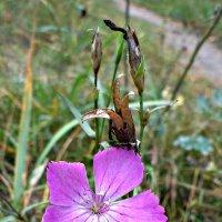 Последние цветы осени... :: Лиана Сашина