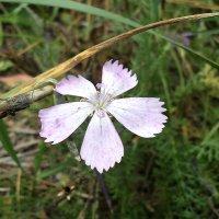 Последние цветы осени.. :: Лиана Сашина