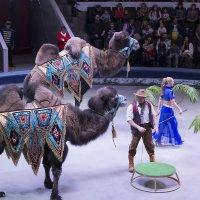 Новосибирский цирк :: Sergey Kuznetcov