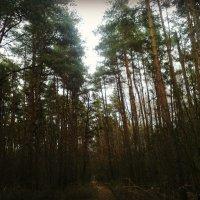 Лес в ноябре. :: Ольга Кривых